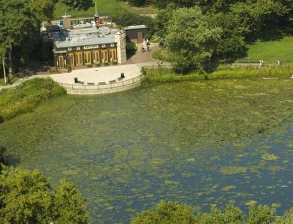 Algae-on-pond-by-restaurant