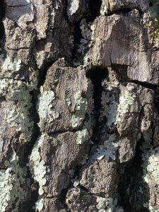 tree bark up close