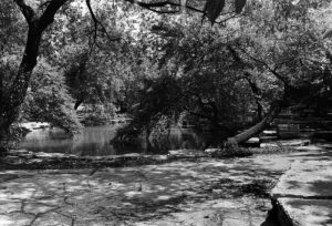 Black and White photo of lily pool, showing stone paved ground and overhanging trees
